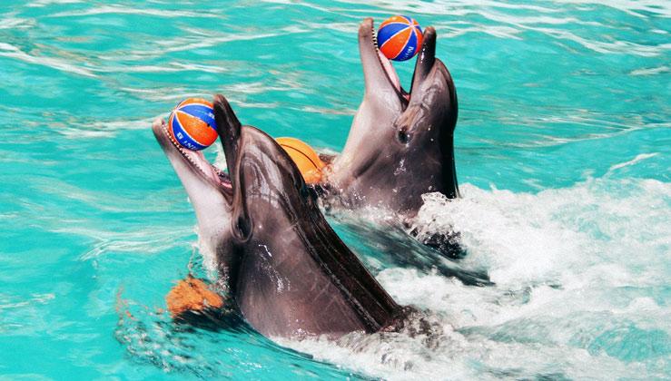 дельфинарий скачать игру